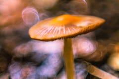 Cogumelo no foco macio Fotografia de Stock Royalty Free