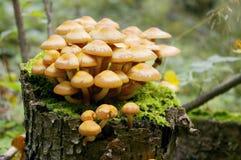 Cogumelo no topo Fotos de Stock Royalty Free