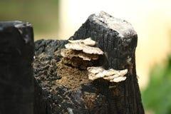 Cogumelo no tronco inoperante imagens de stock