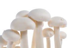 Cogumelo orgânico Imagem de Stock Royalty Free