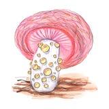 Cogumelo original do fungo ilustração do vetor