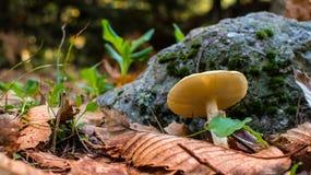 Cogumelo próximo acima na floresta Imagem de Stock
