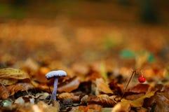 Cogumelo roxo no fundo alaranjado da folha Fotos de Stock Royalty Free