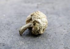 Cogumelo secado Imagens de Stock Royalty Free