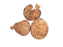 Cogumelo secado Imagem de Stock