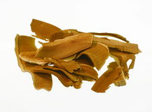 Cogumelo secado de Lingzhi Foto de Stock