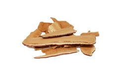 Cogumelo secado de Lingzhi Fotografia de Stock Royalty Free