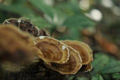 Cogumelo selvagem na luz solar do fundo da floresta Textura do verde, folha da samambaia na floresta Imagens de Stock Royalty Free