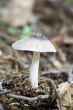 Cogumelo tampado Foto de Stock
