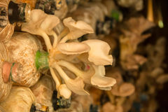 Cogumelo tampado Imagem de Stock