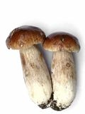 Cogumelo. Um cep. Fotografia de Stock