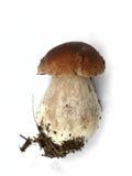 Cogumelo. Um cep. Fotos de Stock Royalty Free