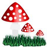 Cogumelo venenoso isolado no fundo branco Fotografia de Stock