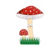 Cogumelo venenoso vermelho ilustração royalty free