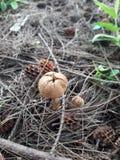 Cogumelos imagem de stock royalty free