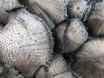 Cogumelos Imagens de Stock