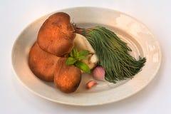 Cogumelos Foto de Stock