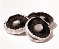 Cogumelos. Foto de Stock