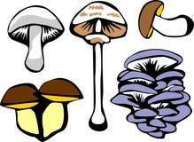 Cogumelos Fotos de Stock