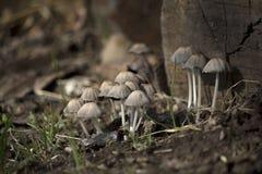 Cogumelos Fotos de Stock Royalty Free