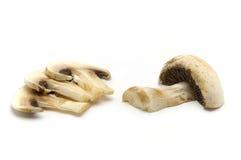 Cogumelos fotografia de stock royalty free