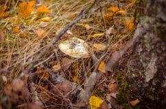Cogumelos, Foto de Stock