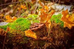Cogumelos, Fotografia de Stock Royalty Free