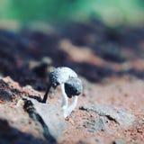 Cogumelos Imagens de Stock Royalty Free