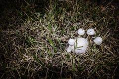 Cogumelos abstratos Imagens de Stock Royalty Free
