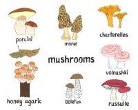 Cogumelos ajustados Coleção de ilustrações tiradas mão do vetor Fotografia de Stock Royalty Free
