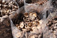 Cogumelos asiáticos secados Fotos de Stock Royalty Free