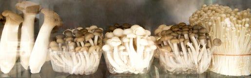 Cogumelos Assorted imagens de stock