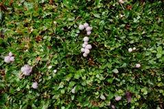 Cogumelos bonitos fotografia de stock