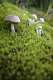 Cogumelos bonitos Foto de Stock Royalty Free