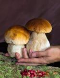 Cogumelos bonitos do branco dos pés Imagem de Stock