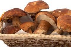 Cogumelos brancos Imagens de Stock Royalty Free