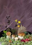 Cogumelos brancos com airelas Imagem de Stock
