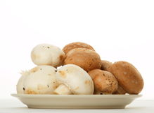 Cogumelos brancos e marrons Imagens de Stock
