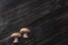 Cogumelos brancos em placas pretas Imagem de Stock