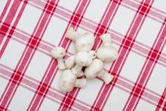 Cogumelos brancos em um tablecloth vermelho Imagens de Stock