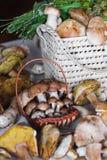 Cogumelos brancos Fotografia de Stock