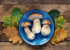 Cogumelos brancos em uma placa e nas folhas do carvalho na tabela, vista superior Foto de Stock