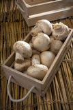 Cogumelos brancos frescos, cogumelos de Paris Imagens de Stock