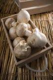 Cogumelos brancos frescos, cogumelos de Paris Foto de Stock Royalty Free
