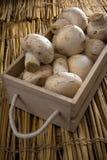 Cogumelos brancos frescos, cogumelos de Paris Fotografia de Stock Royalty Free