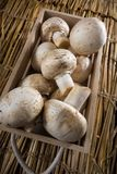 Cogumelos brancos frescos, cogumelos de Paris Imagem de Stock Royalty Free