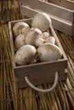 Cogumelos brancos frescos, cogumelos de Paris Imagem de Stock