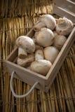 Cogumelos brancos frescos, cogumelos de Paris Fotos de Stock