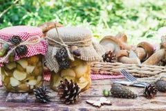 Cogumelos brancos na caixa com decorações secas Imagem de Stock