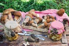 Cogumelos brancos na caixa com decorações secas Fotografia de Stock Royalty Free